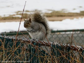 """""""Hi there. I live in your neighbor's tree, but I like your peanuts."""""""