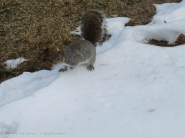 """""""There's more snow in the forecast. I'm foraging for peanuts...hint, hint, hint."""""""