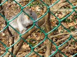 """""""I can fit through there, but if you could toss a peanut over the fence, it would be nice."""""""