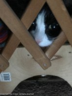 Don't worry. MuMu is not trapped. She fits under that opening - Maddie can't get in, that's the important thing.