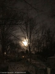 The full moon rising over the back yard.