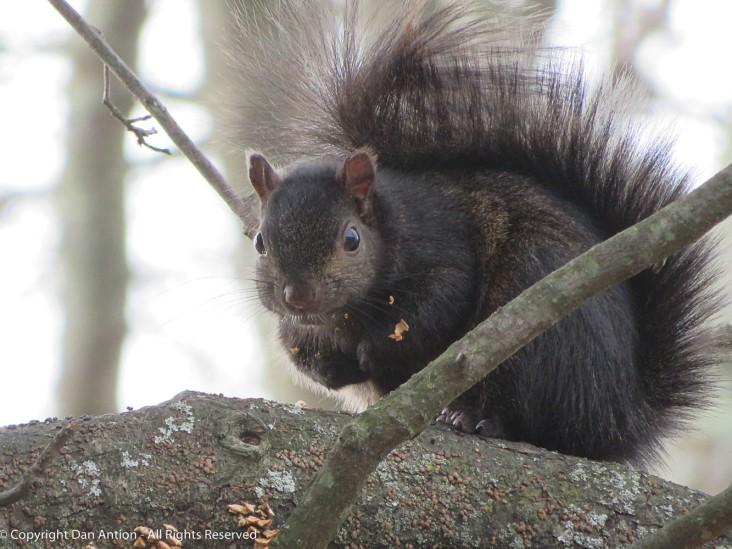 Smokey has a few peanut crumbs in his coat,but he's still cute.