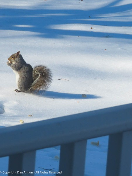 The squirrels aren't heavy enough to break through so they're walking on a frozen world.