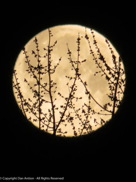 I was trying to focus on the moon, with the tree in front.
