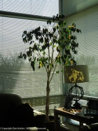 I wonder if my keeping the blinds closed has robbed this tree of necessary sunlight. Trying to fix that.