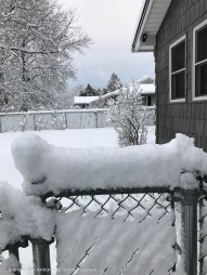 The snow was so sticky, it filled in most of the fence.