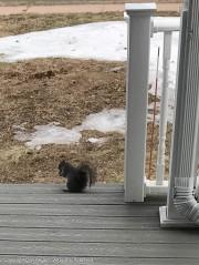 Smokey seems like he's going to eat here.