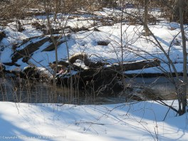 This is a small section of Kettle Brook.
