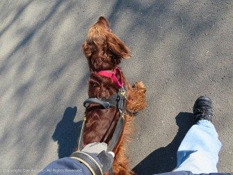 Maddie wants to go around the long way through the park.