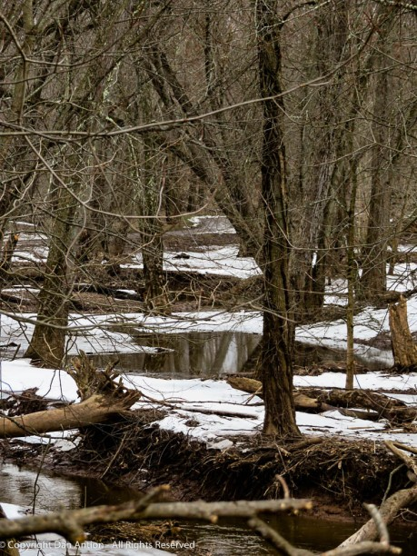 The Farmington River floods into these woods.