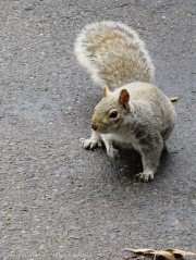 """""""Hi, I know it's late, but I was wondering if you have a peanut?"""""""