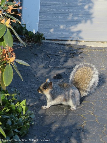 "Another ""starving"" squirrel."