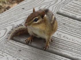 Hi Chippy!