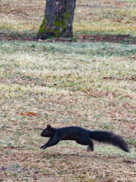 That isn't our Smokey, he's running through Maddie's park.