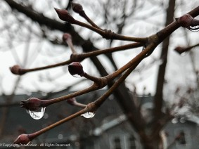 Water drops on the dogwood.