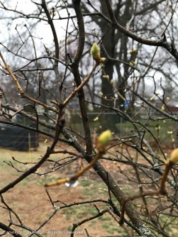 Rain and a few signs of spring.