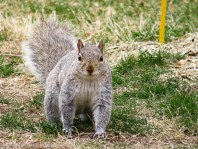 """""""Thanks for the peanuts."""""""