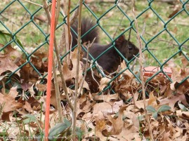 Smokey is reminding me that I have to clean up those leaves (I did).