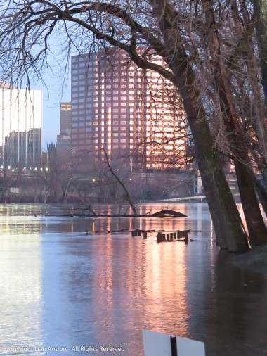Those big trees are normally on dry land. Those posts in the water are the railing of a submerged viewing deck.