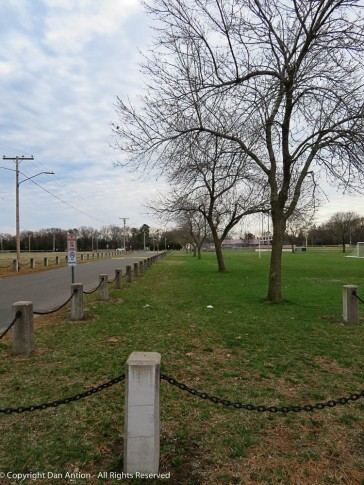Maddie's park is turning green and starting to bud.