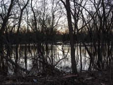 Two days ago, you could walk through that clearing. The CT River jumped its banks.