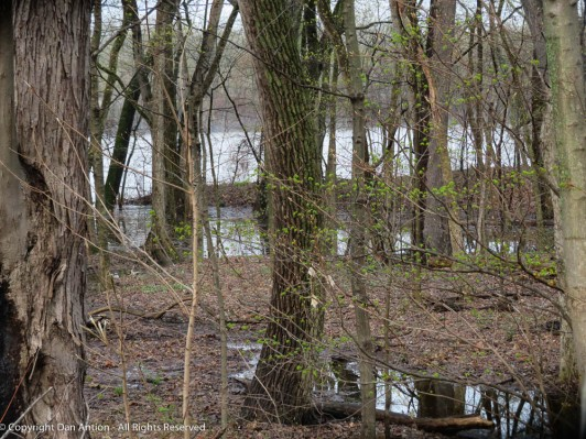 The Connecticut River has flooded into the woods along the bank.