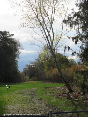 Looking down the utility access road near Maddie's park.