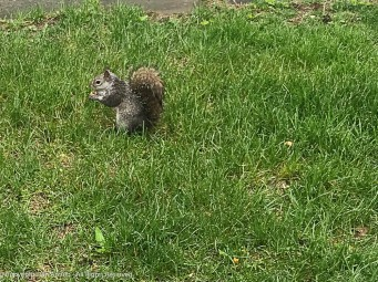 One wet, hungry little squirrel. I gave him a peanut. He just sat and ate it and begged for another. Maddie didn't seem to mind waiting.