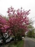 Walking in spring.