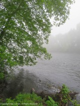 Farmington River near the bar.
