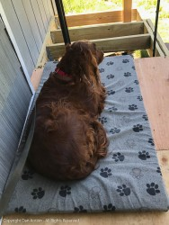 """Close to the wall. Maddie is enjoying her new """"deck"""""""