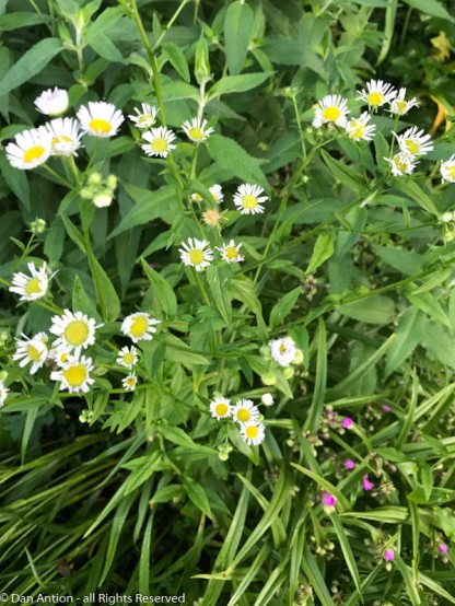 Some of these things are weeds, but we like seeing them in the yard.