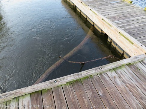 No, that's not the sea monster, A log is trapped under the dock,