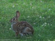 Bunny bun!