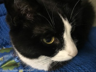 MiMi is a pretty cat.