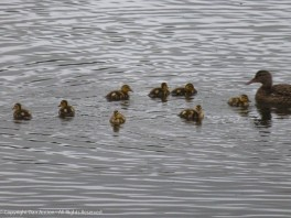 """""""Listen up kids. We all need to swim in the same direction."""""""