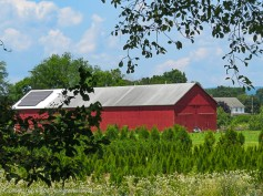 Looking off to the side of the rail trail as we walked past a tobacco barn.
