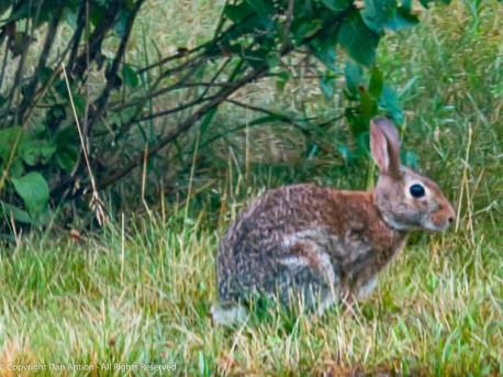 """It's OK, bunny bun. You can keep eating."""