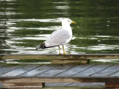 Sittin' on the dock...
