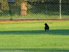 """""""The field is a little wet, but I think we can play."""""""