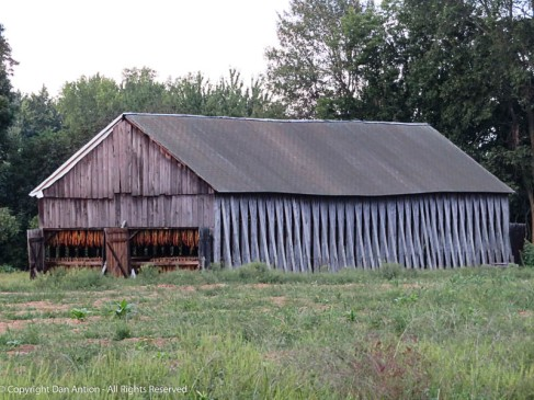 The tobacco is strung on long rails and suspended in these barns. The side slats are opened to promote airflow. If necessary, they add heat from propane burners.