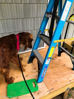 """""""OK, the door is out of the way, but why is there a ladder here?"""""""