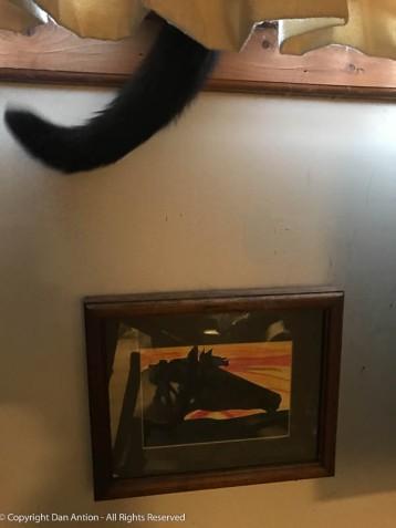 The girls like this basement window. That's MuMu's tail.