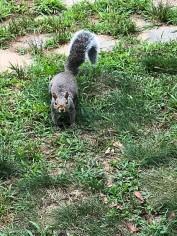 """""""Hi. Did you bring the peanuts?"""""""