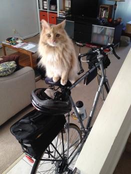Preston seems to like Faith's bike.