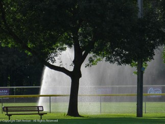I keep trying to catch the sparkles in these sprinkler flows.