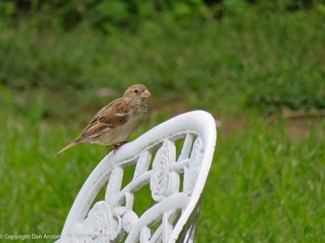I'm going with Birdy-Bird