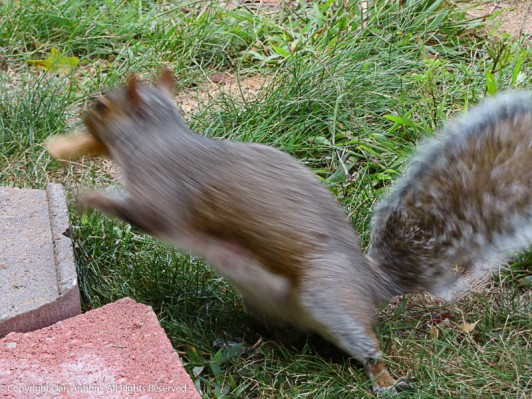 For those of you that were wondering if the little mom squirrel got a peanut.