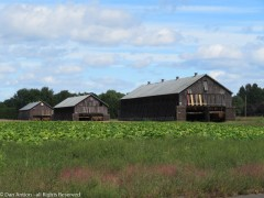 There's still more tobacco to harvest here, but it looks like these barns have room on the lower level.