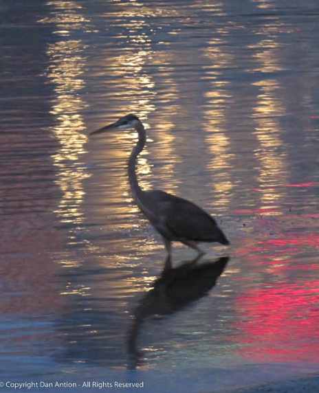 I think this is a Blue Heron.